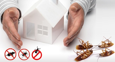 Image result for Pest Management - What You Need To Know
